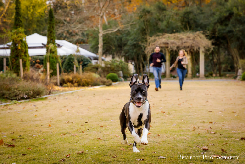 Dog Running Engagement Photos